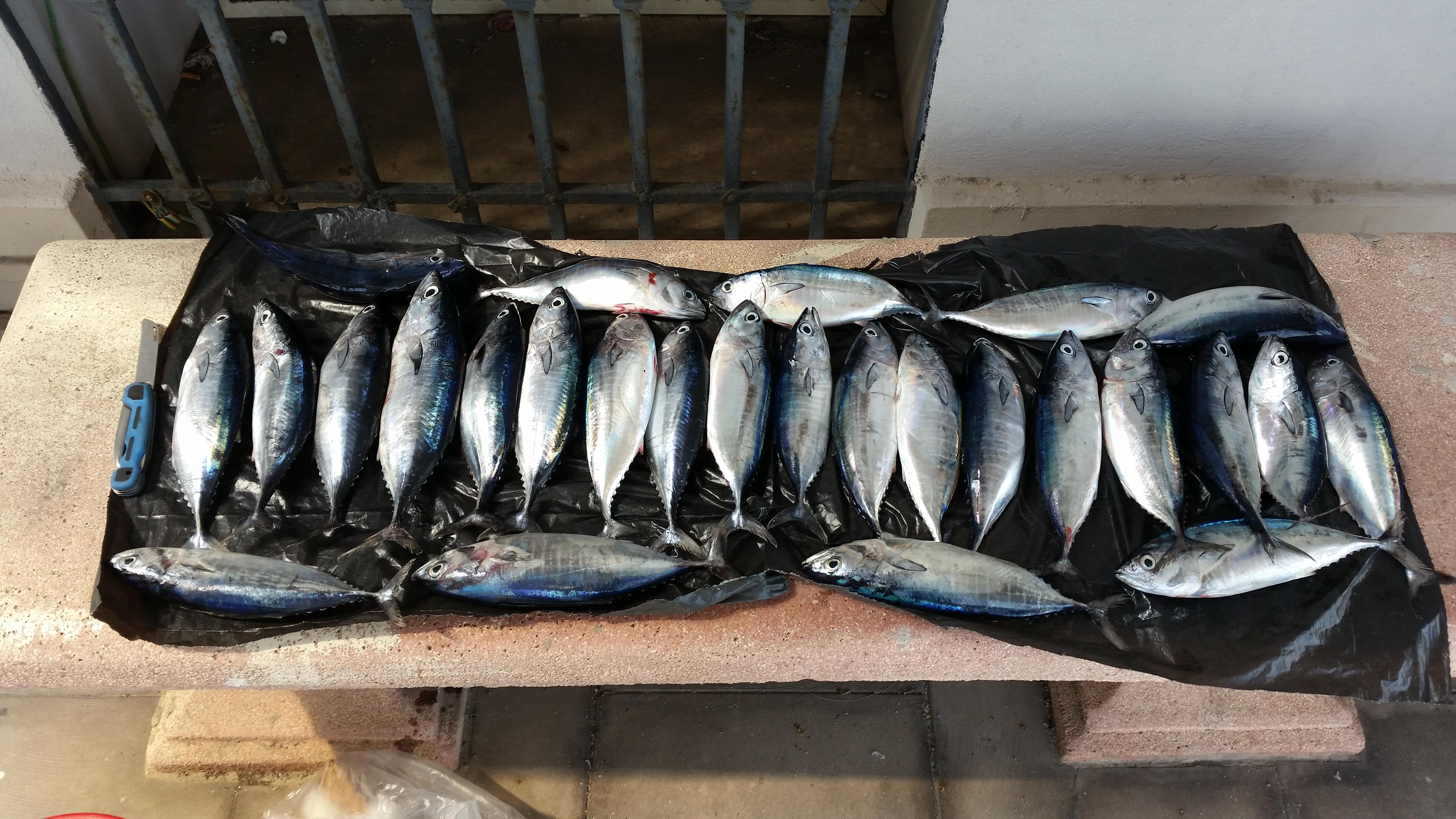 tonno rosso sequestrato dalla guardia costiera di messina a santo saba