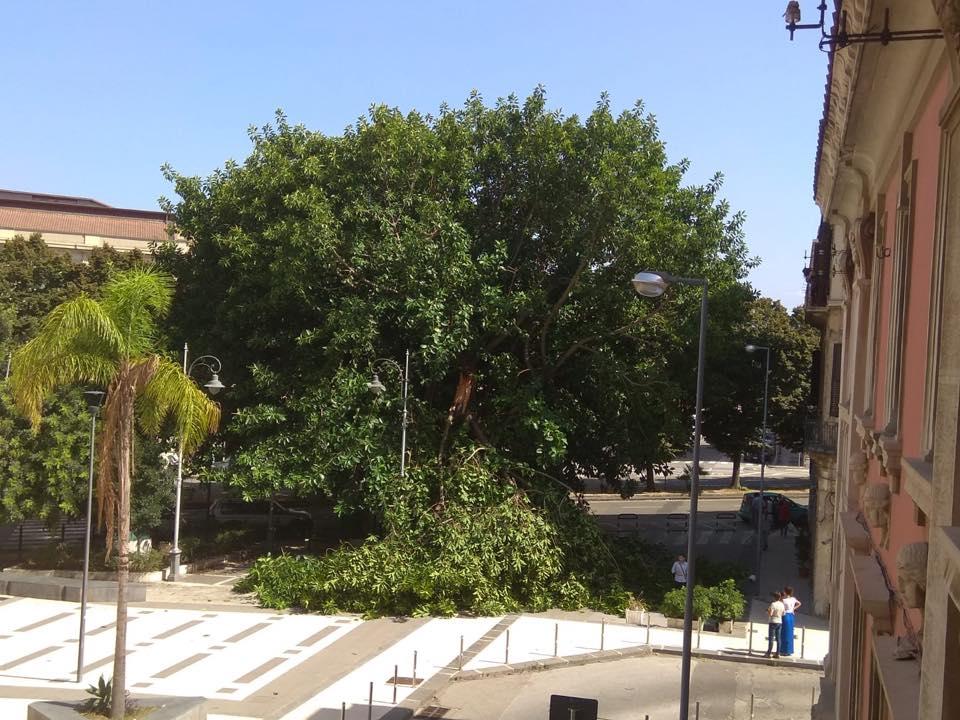 albero messina