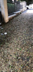 Decoro Messina pulizia foglie Tommaso Cannizzaro