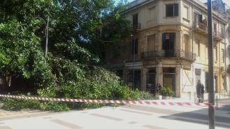 Ramo spezzato albero chiesa santa caterina - Messina