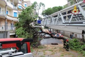 2 crollo albero viale regina margherita