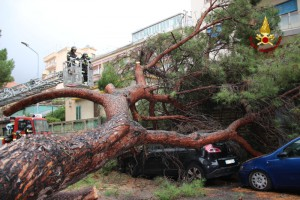 3 crollo albero viale regina margherita