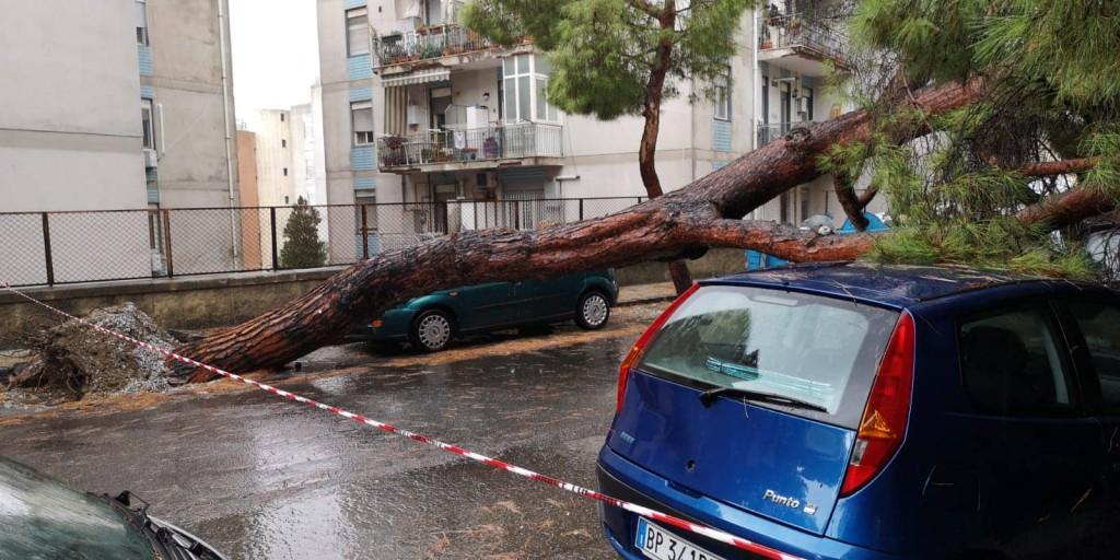 Messina - crollo albero viale regina margherita