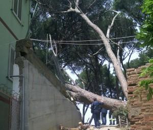 albero caduto via pescheria