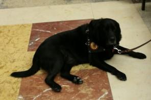 Messina. Si celebra oggi la XIII Giornata Nazionale del Cane Guida
