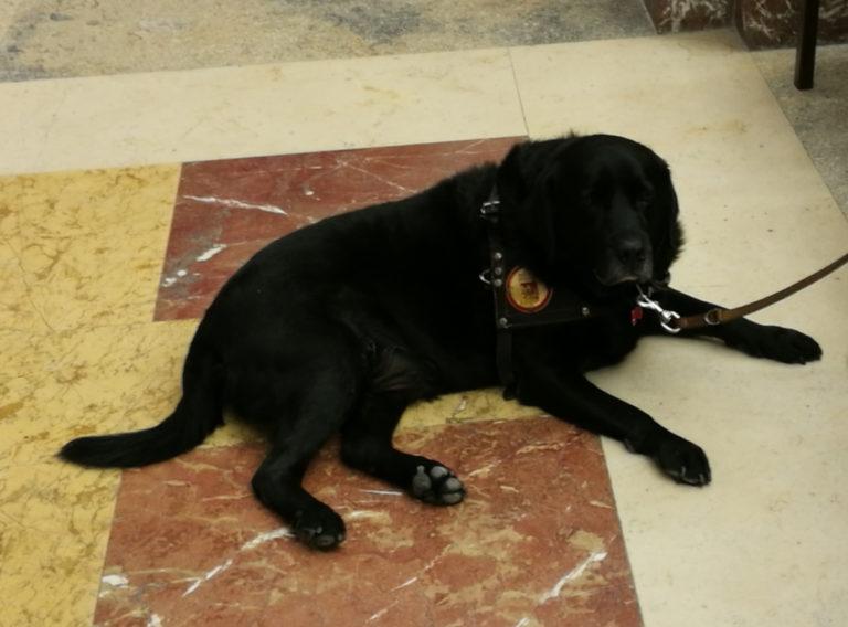 foto di un cane guida a Palazzo Zanca per la XIII Giornata nazionale del cane guida