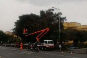 """Potatura degli alberi a Messina: segnalate alcune """"anomalie"""" nella passata gestione"""