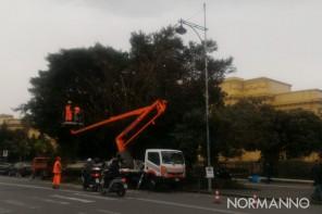 Messina: abbattuti 250 alberi a rischio crollo. Il piano potatura del 2019