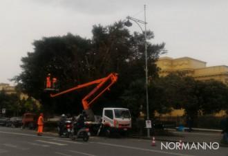 potatura alberi di fronte al tribunale di messina