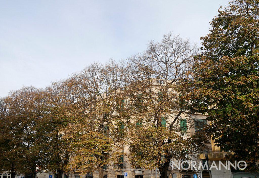 alberi via garibaldi messina