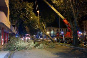 Emergenza alberi a Messina. Due crolli in via La Farina e via I Settembre – FOTO