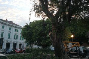 Messina. In corso interventi di messa in sicurezza alberi a Piazza del Popolo