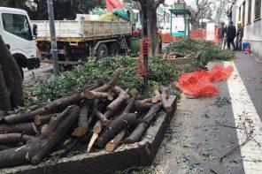 potatura degli alberi in via tommaso cannizzaro a messina