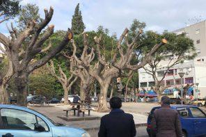 Messina. Blizt di De Luca sulla potatura degli alberi: «Stanno andando troppo a rilento»