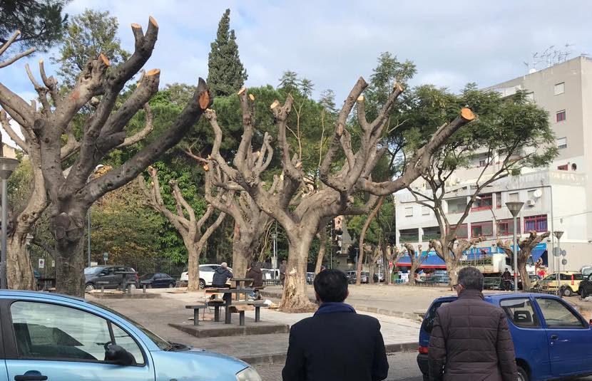 piazza xx settembre potatura alberi