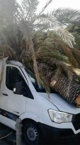palma caduta su un furgoncino a causa delle raffiche di vento che stanno colpendo messina