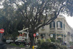Potatura alberi a Messina: oggi è la volta di Piazza Duomo