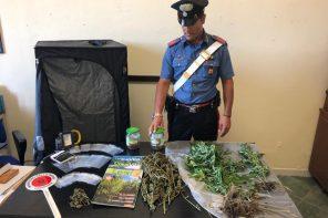 Coltiva marijuana vicino casa: arrestato 26enne
