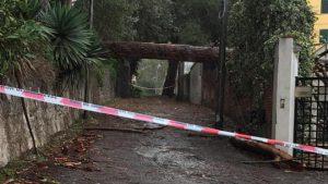 albero caduto per il maltempo a messina
