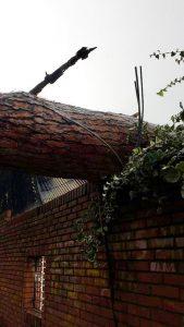 albero caduto per il maltempo a messina sui cavi della luce interrompendo la distribuzione di acqua in città