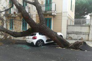 Maltempo a Messina: alberi crollati e danni in tutta la città