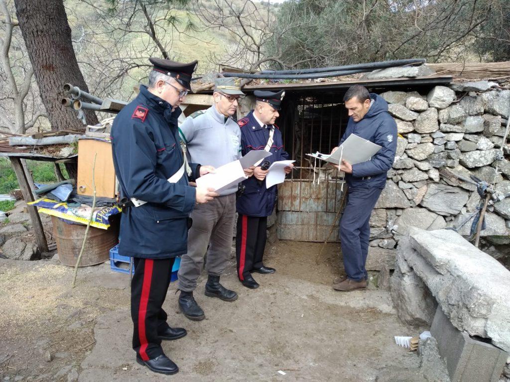 controllo aziende zootecniche in provincia di messina e sequestro di animali