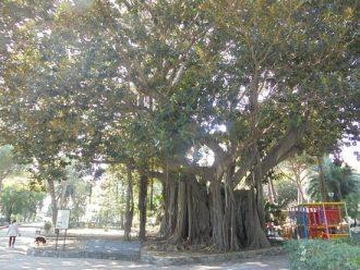 magnolia villa mazzini