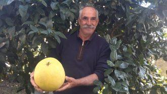 Giuseppe Danisi tiene il pompelmo da record