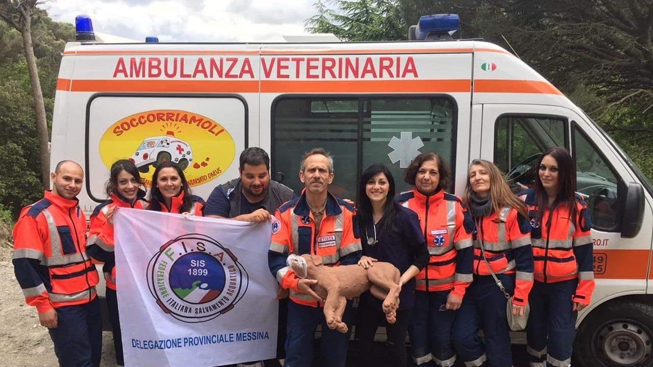 ambulanza veterinaria dell'associazione soccorriamoli messina onlus