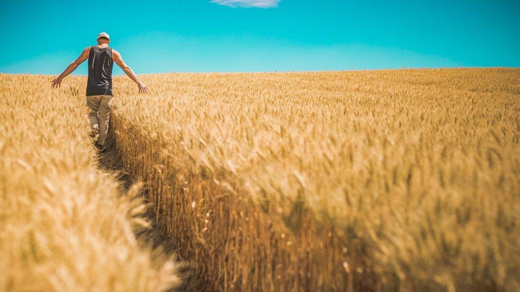 foto di un ragazzo che cammina in un campo di grano