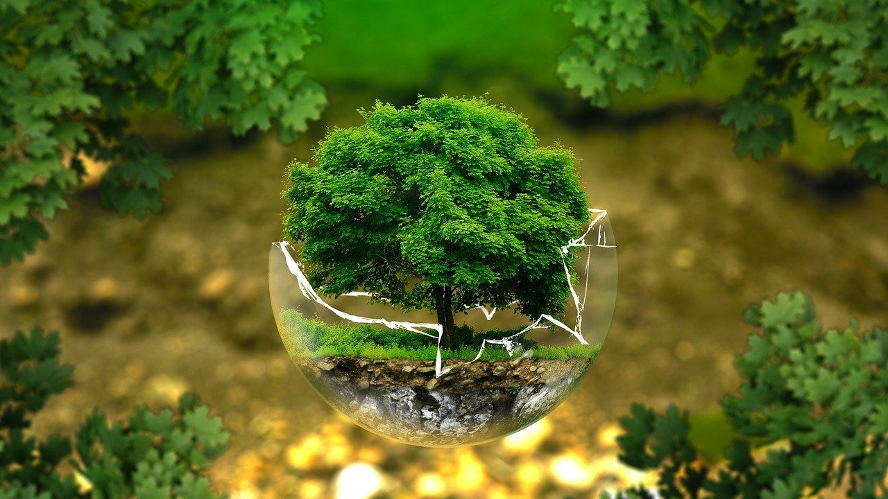 foto di un albero in una palla di vetro, simbolo della necessità di scelte ecologiche e green per l ambiente