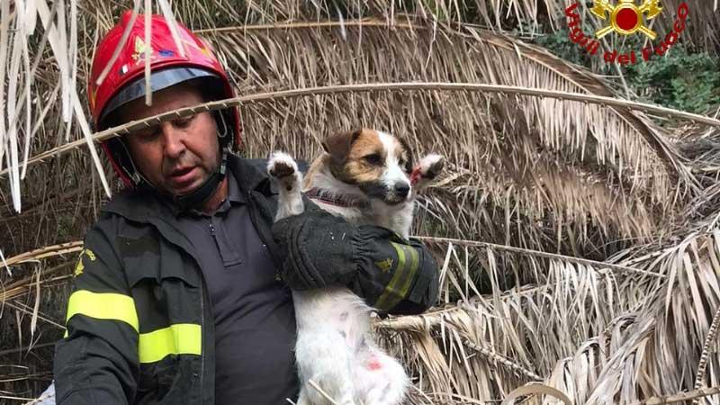 belle notizie messina: cane salvato dai vigili del fuoco