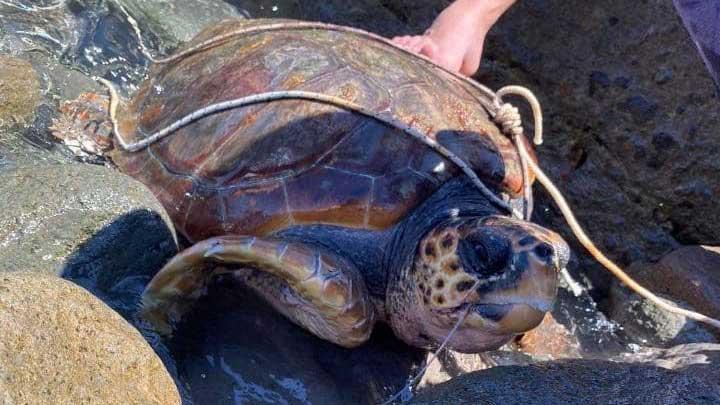 belle notizie: tartaruga marina salvata a Vulcano