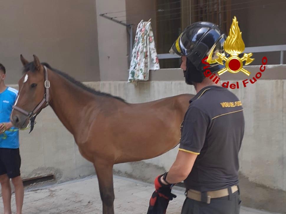 cavallo allontanato mentre i vigili del fuoco domano l'incendio a Camaro San Paolo
