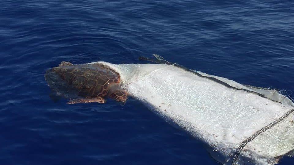 la tartaruga charlotte salvata alle isole eolie