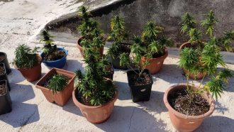 salina, denuncia per coltivazione di marijuana