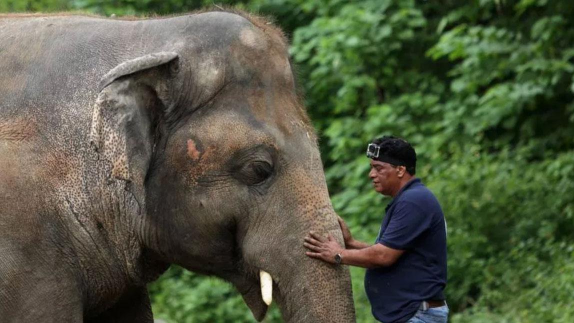 belle notizie: kavaan, l'elefante più solo del mondo sarà liberato