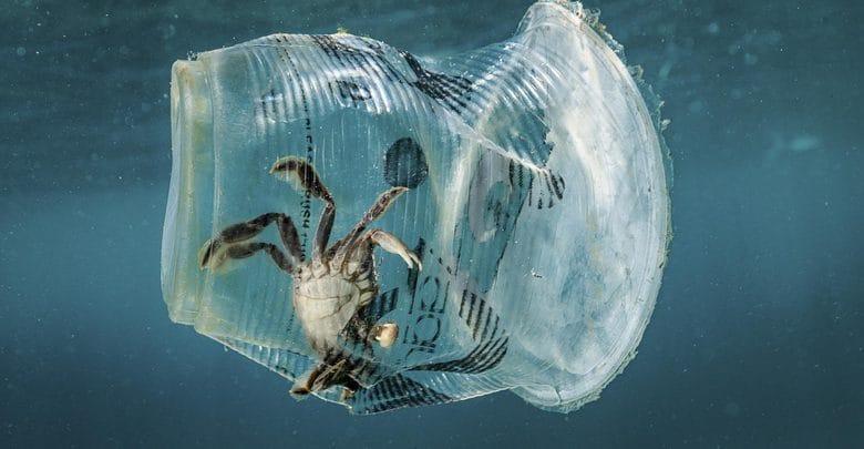 bicchiere di plastica con dentro imprigionato un granchio