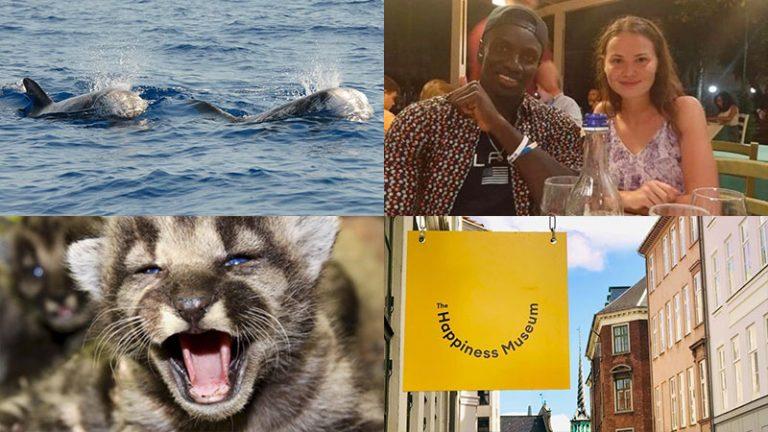 collage delle quattro belle notizie da messina e dal mondo: episodio 16
