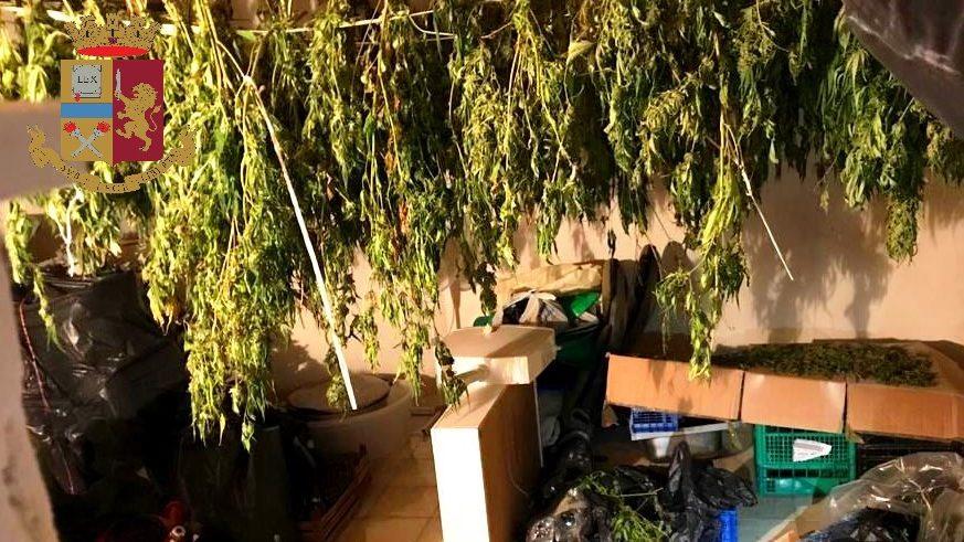serra artificiale per la coltivazione di marijuana a Messina: arrestata 31enne a Santa Lucia Sopra Contesse