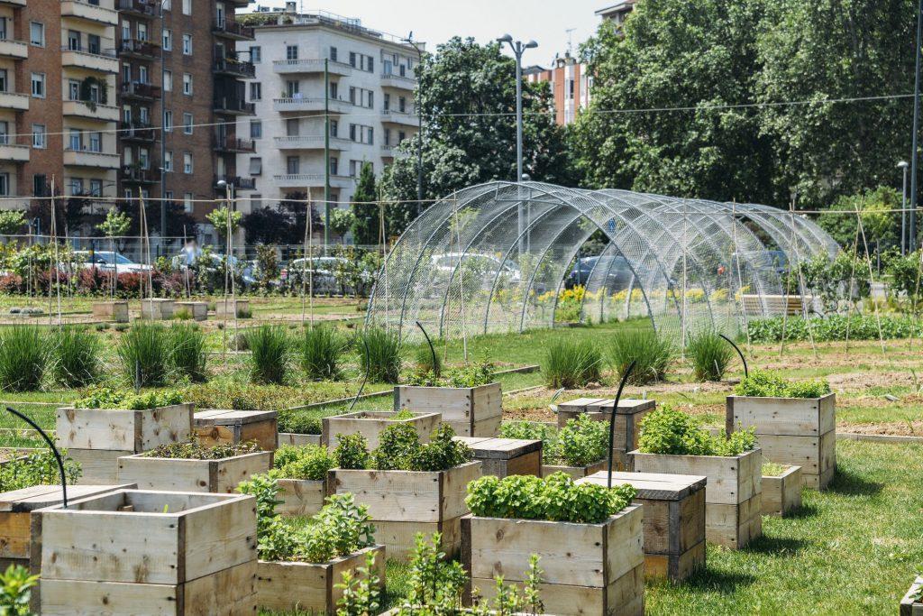 foto di un orto urbano di milano