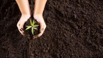 pianta, seme, ambiente