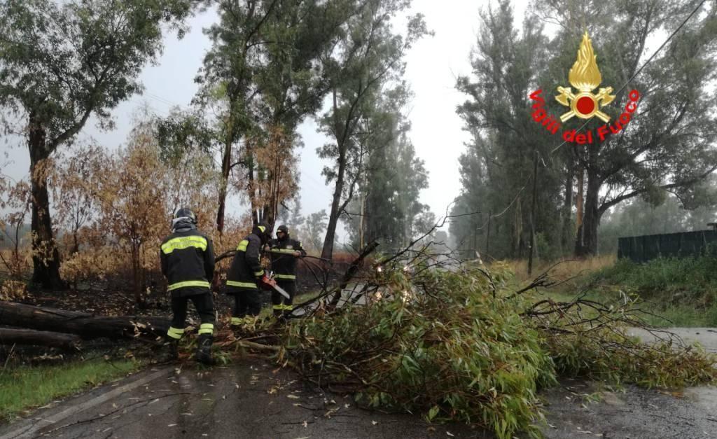 albero caduto in provincia di messina a causa del vento
