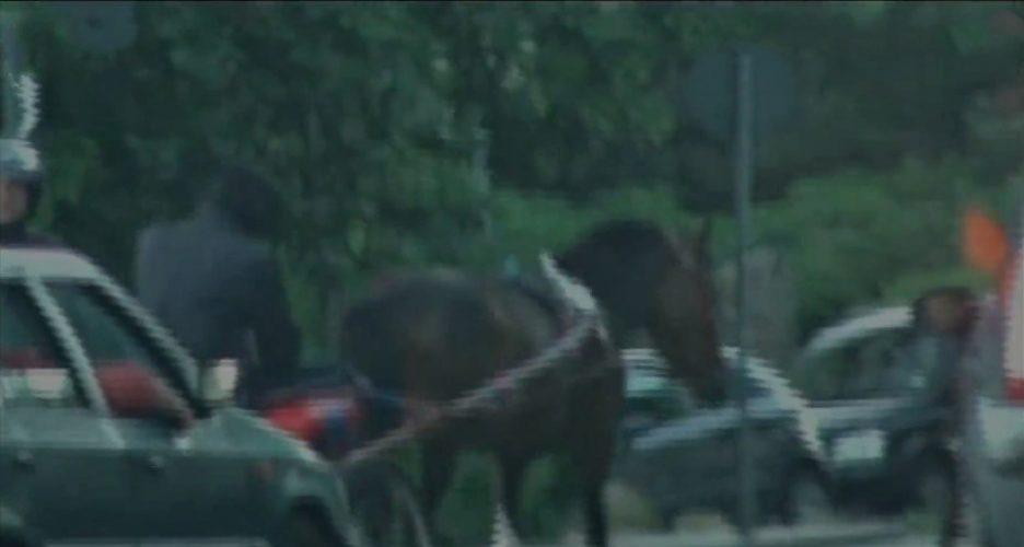 corse di cavalli a messina