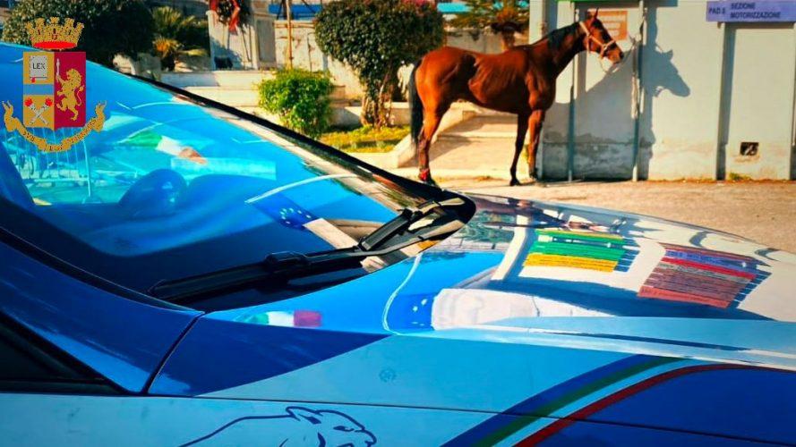 corse clandestine di cavalli a messina