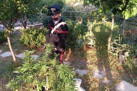 arresti per droga a taormina