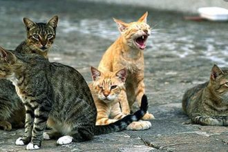 colonia felina, gatti