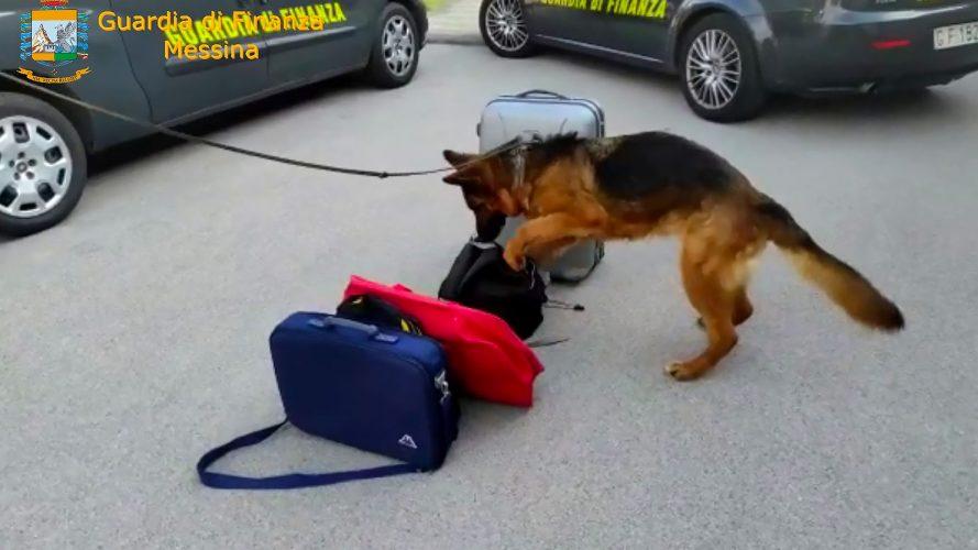 arresto corriere della droga a messina: scoperto da cani antidroga