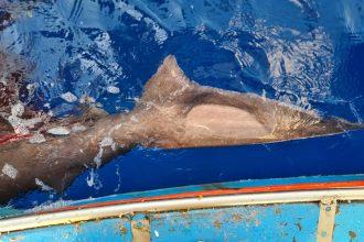 squalo salvato alle isole eolie