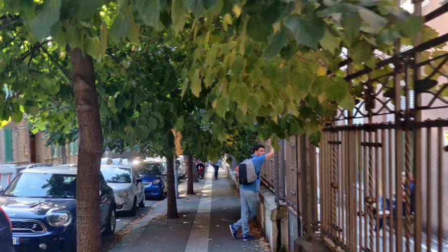 alberi vicino all'università di messina